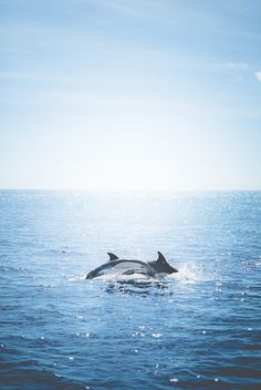 10bullets: Dolphins by Zanthia on Flickr. __ are dolphins a kind of whales too? not sure. but beautiful :)
