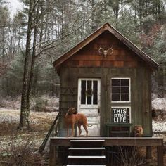 A Cabin in the Woods is All I Need (31)
