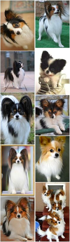Top 15 Cutest Small Dog Breeds