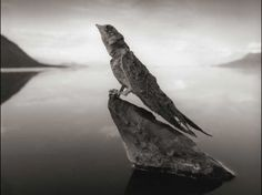 This bird has not turned to stone but was solidified from exposure to high levels of soda ash and salt at lake Natron, Tanzania
