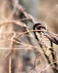 Country Fence Photography - rustic, country, brown, barbed, vines