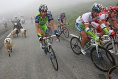 Tour de France 2010. The last mountain stage include fog and mad sheep. Source: http://nymag.com/daily/sports/2010/07/tour_de_france_an_epic_battle.html