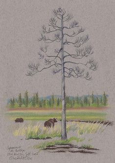 http://naturesketchers.blogspot.fr/2017/10/sketching-in-northern-finland-concetta.html