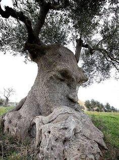 El Olivo pensante, Ginosa, Italia.