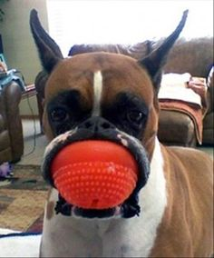 dog has ball in his mouth 마우스패드~