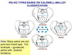 applied-anatomy-of-pelvis-and-fetal-skull-36-638.jpg (638×479)