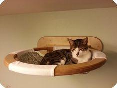 Гамак для кошки. Гамаки для кошек на стену. Когтеточка с гамаком. Купить гамак для кошки