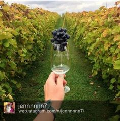 Chrysalis Vineyards by @jennnnnn7 #vawine