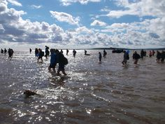 Walk across Morecambe Bay, 30 July 2016. Wading the deepest part!