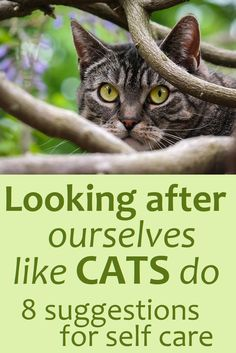 We're not always good at giving ourselves the care we show to others - but self-care is vital to help us manage things like illness, pain, fatigue, stress, anxiety etc. Cats can teach us a thing or two about self care. Fibromyalgia Pain, Chronic Pain, Trigeminal Neuralgia, Hypermobility, How To Express Feelings, Ehlers Danlos Syndrome, Pain Management, Multiple Sclerosis, Chronic Illness