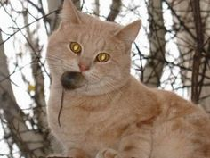 """""""I always find it curious as to why I take such pains to keep my cat's bowls clean when I know I will look out the window and see her with a dead mouse in her mouth."""" --Fannie Roach Palmer"""