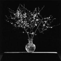 Robert Mapplethorpe Flowers | robert mapplethorpe photography » robert-mapplethorpe-flower-image-6