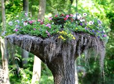 Stumpery - reusing tree stumps for pockets of foliage. Natural garden design with stumpery yard decorations