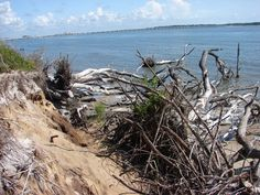 Big Talbot Island State Park is primarily a natural preserve providing a premier location for nature study, bird-watching and photography.