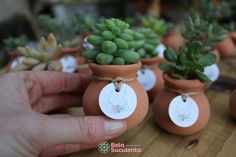 Most up-to-date Screen succulent planting souvenir Style Most up-to-date Screen . - Most up-to-date Screen succulent planting souvenir Style Most up-to-date Screen … - Guestbook Wedding, Succulent Wedding Favors, Diy Wedding Favors, Wedding Decorations, Wedding Ideas, Succulent Gardening, Planting Succulents, Cacti And Succulents, Succulent Favors