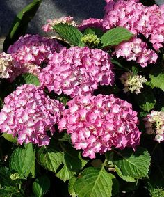 Vegetable Garden, Floral Wreath, Gardening, Wreaths, Plants, Decor, Floral Crown, Decoration, Door Wreaths