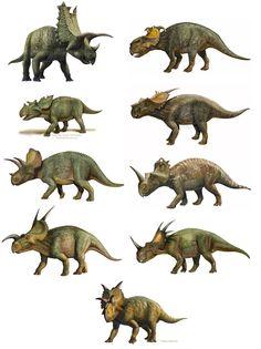 Different Ceratopsids by Sergey Krasovskiy http://atrox1.deviantart.com/gallery/