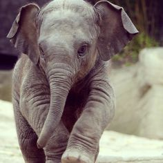 ...baby elephants, are so cute...