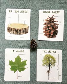 Montessori Nature Study October: Anatomy of a tree, anatomy of a trunk, leaf and bark identification. These beautiful materials are from to supplement our free nature study found at Preschool Labels, Creative Curriculum Preschool, Montessori Science, Preschool Themes, Kindergarten Activities, Preschool Class, Homeschool Curriculum, Homeschooling, All Nature