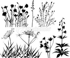 various plant silhouettes