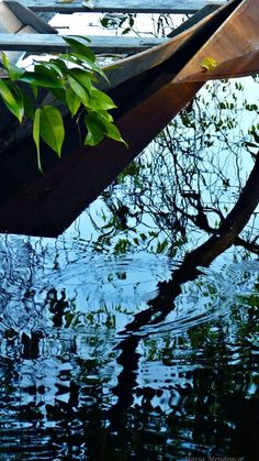 Reflexo Photo by Maria Mendonça -- National Geographic Your Shot