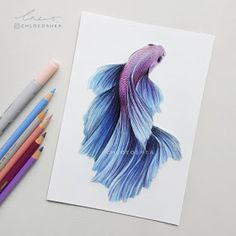 Color Pencil Drawing Betta Fish: 2 -I worked on this one the other day, finally I had a free moment to finish it. I really love drawing these guys, its very relaxing. Fish Drawings, Pencil Art Drawings, Love Drawings, Colorful Drawings, Art Drawings Sketches, Animal Drawings, Beta Fish Drawing, Cat Drawing, Drawing Faces