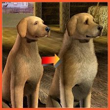 An improved golden retriever for your Sims 3 pets. Download is much fluffier.