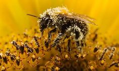 Bee-harming pesticides banned in Europe. Read More Here: http://www.guardian.co.uk/environment/2013/apr/29/bee-harming-pesticides-banned-europe