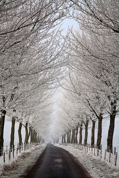 Winter in Melissant, South Holland, Netherlands