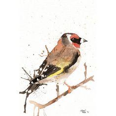 Original watercolor Painting  Goldfinch Bird Yellow by MilkFoam, $45.00