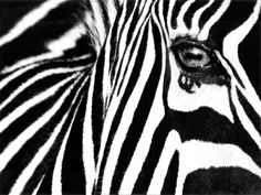The focus on the eye is beautiful.   <3 Zebra