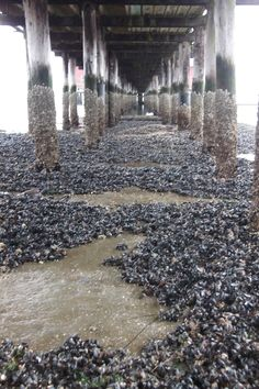 Mussel Beach- Taken at Coupeville, Whidbey Island, Washington