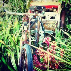 .@anna Stylianou's Instagram photos #bike #photo #cat