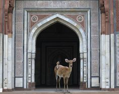 Karen Knorr, The Messenger,Purana Quila, New Delhi