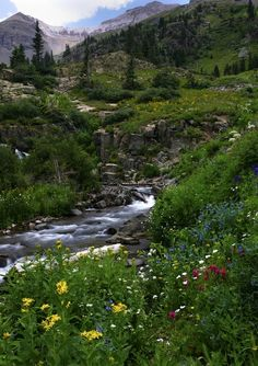 Yankee Boy Basin - Ouray, CO...only recommended way to get here is by 4 x 4 vehicle. Gorgeous views and full of wildflowers during the summer!