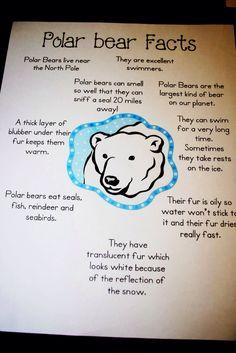 Polar Bear Facts for Kids   Polar bear, Polar bear facts and Bears