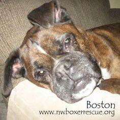 Boston has been adopted! Congrats Boston!