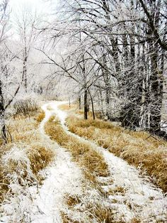 Journey down a peaceful woodland trail on a frosty February day in Minnesota by Penny Meyers