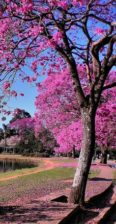 """See 12891 photos and 538 tips from 91142 visitors to São Paulo. """"most vibrant city in southern emisphere. Wonderful Places, Beautiful Places, Beautiful Pictures, Amazing Places, Places To Travel, Places To See, Places Around The World, Around The Worlds, Flowering Trees"""