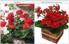 Gerânio e Flor da fortuna: baratinhas! Perfeitas pra um DIY  Flores vermelhas | Paperland & Co.