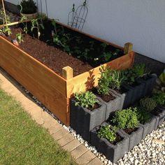 Love Garden, Dream Garden, Home And Garden, Sunflower Flower, Rooftop Garden, Different Plants, Hacks Diy, Garden Projects, Beautiful Gardens