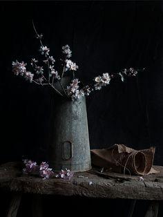 My new Photo Journal - Joanna Maclennan Photography Be Still, Still Life, Fun Shots, Photo Journal, Ikebana, Bonsai, My Photos, Images, Creative
