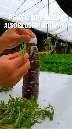 Eco Garden, Vegetable Garden Design, Natural Garden, Edible Garden, Garden Tips, Succulent Gardening, Garden Terrarium, Container Gardening, Garden Plants