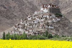 Chemrey Monastery, Mustard Fields and the Himalayas of Ladakh, India