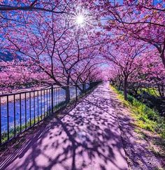 Science Discover Nature Photography Japan Paths 70 Ideas For 2019 Wonderful Places Beautiful Places Amazing Places Path To Heaven Nature Photography Travel Photography Japanese Photography Amazing Photography Japan Photo Photo Japon, Japan Photo, Japan Picture, Shizuoka, Wonderful Places, Beautiful Places, Beautiful Pictures, Amazing Places, Path To Heaven