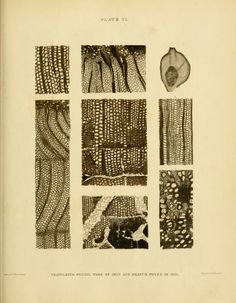 The internal structure of fossil vegetables found in the carboniferous and oolitic deposits of Great Britain - Biodiversity Heritage Library...