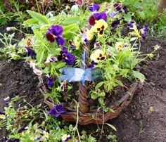flowerbed from the old basket