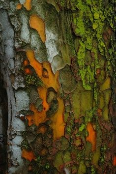this is an example of texture because you can see how the bark is rough and coming off the tree.