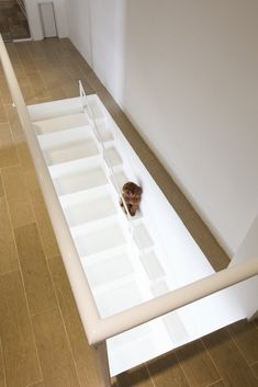 Image 2 of 5 from gallery of Staircase for Dogs / © Hiroyuki Oki / Decon Photo Studio House Staircase, Architect Design, Creative Home, Simple House, Modern Interior Design, Stairways, Decoration, House Design, Architecture