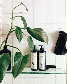 Shower plant: a tendência de colocar plantas dentro do box do banheiro de casa